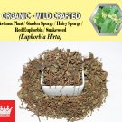 8 Oz / 227g Asthma Plant Garden Spurge Hairy Spurge Red Euphorbia Snakeweed Euphorbia Hirta
