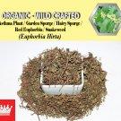1 Lb / 454g Asthma Plant Garden Spurge Hairy Spurge Red Euphorbia Snakeweed Euphorbia Hirta