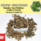 1 Lb / 454g Madamfate Star of Bethlehem Longflower Laurentia Isotoma Longiflora Organic Wild