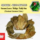 3 Oz / 84g Gnemon Leaves Melinjo Paddy Oats Gnetum Gnemon Linn. Organic Wild Crafted Fresh
