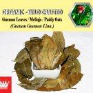 1 Lb / 454g Gnemon Leaves Melinjo Paddy Oats Gnetum Gnemon Linn. Organic Wild Crafted Fresh