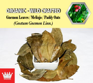 1 Lb / 454g Gnemon Leaves Melinjo Paddy Oats Gnetum Gnemon Linn. Organic Wild Crafted Fresh