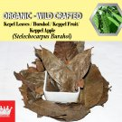 8 Oz / 227g Kepel Leaves Burahol Keppel Fruit Stelechocarpus Burahol Organic Wild Crafted