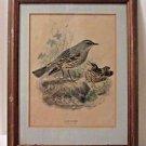 "Bird Print Alpine Accentor Antique Framed 15"" x 12""  BEAUTIFUL!"