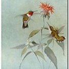 Beautiful Fun Decor Design Collectible Kitchen Fridge Magnet - Cute Hummingbirds