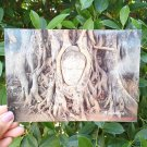 Postcard Amazing Buddha head covered with tree roots at Wat Mahathat