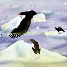 Stellar Sea Eagle Island Print