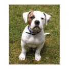 Greeting Cards Dog Cards Blank Notecards 220