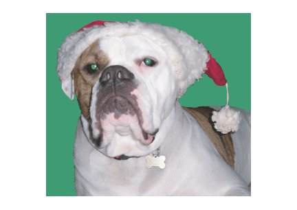 Greeting Cards Dog Cards Blank Notecards 223