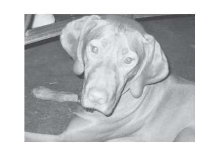Greeting Cards Dog Cards Blank Notecards 226