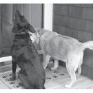 Greeting Cards Dog Cards Blank Notecards 211