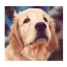 Greeting Cards Dog Cards Blank Notecards 231