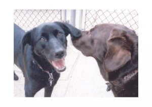 Greeting Cards Dog Cards Blank Notecards 232