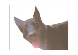 Greeting Cards Dog Cards Blank Notecards 235