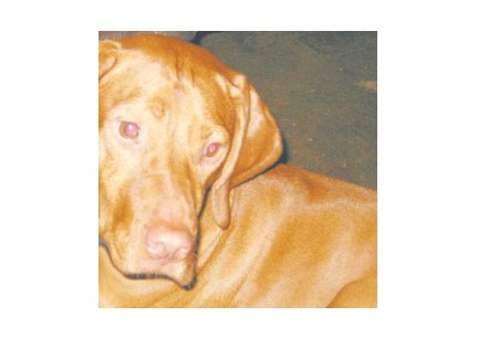 Greeting Cards Dog Cards Blank Notecards 244