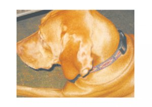 Greeting Cards Dog Cards Blank Notecards 245