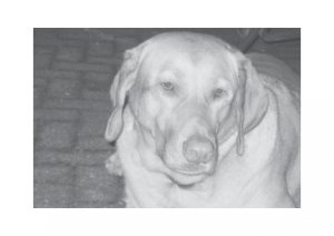 Greeting Cards Dog Cards Blank Notecards 247