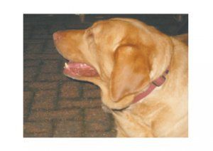 Greeting Cards Dog Cards Blank Notecards 248