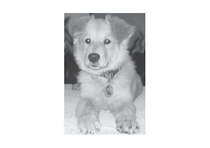 Greeting Cards Dog Cards Blank Notecards 252