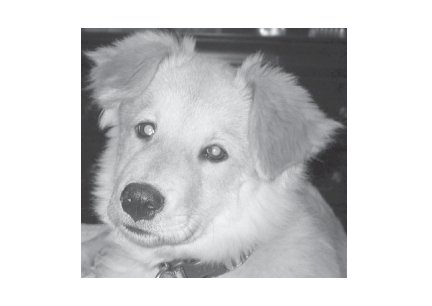 Greeting Cards Dog Cards Blank Notecards 253