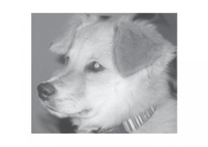 Greeting Cards Dog Cards Blank Notecards 254