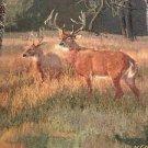 Deer Hunting Tapestry Throw Blanket Fringe 48x58 Cabin Wildlife Lake Woods Bucks