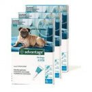 ADVANTAGE AQUA 12 PACK MEDIUM DOGS 11-20 LBS