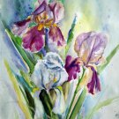 Original watercolor painting, Iris flowers, floral wall art, wall decor, botanical, nature artwork