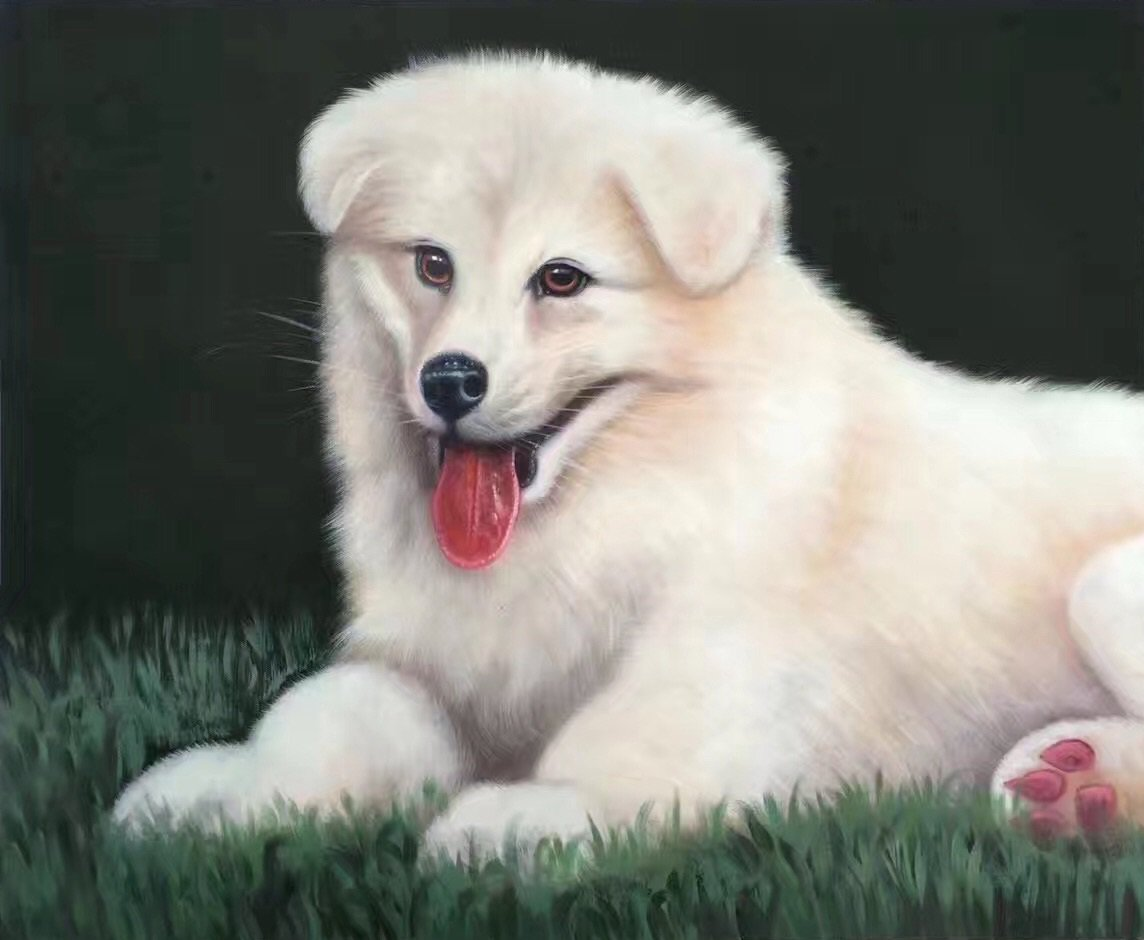 "Simple modern Hand-painted oil painting on canvas""Cute dog""50x60CM(19.7""x23.6"")Unframe-03"