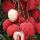 5 Fresh Thai Lychee Fruit Seeds Lychee Subtropical Seasonal Fruit 3 Fresh Seeds Thai V.Rare Sweet