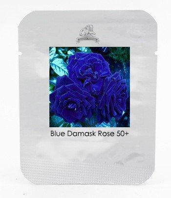 Rare Heirloom 3-Flower Blue Damask Rose Bush Flower Seeds, Professional Pack
