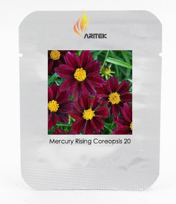 The Rarest Mercury Rising Coreopsis Dark Red Cosmos Flower Seeds Hardy Perennial