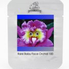 the World's Rarest Baby Face Orchid Perennial Flower Seeds, Professional Pack