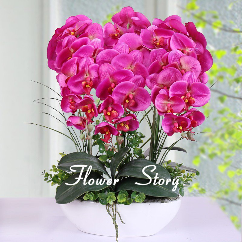 10 Phalaenopsis Seeds Rare Beautiful Bonsai Flower Seeds Popular DIY