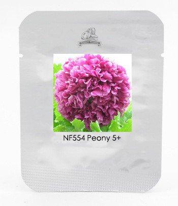 Heirloom Purple Chinese Peony Flower Seeds  Rare 'Ming's Purple Tree Peony