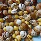 Mini Land Snails Seashells Crafts Sea Shells Small Conch Yellow Colorful Spiral
