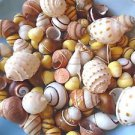 Mini Yellow Land Snails Seashells Crafts Sea Shells Spiral Bonnet Conch Striped