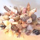 30 Seashell Party Toothpicks Cocktail Picks Shell Beach Wedding Conch Spiral Mix