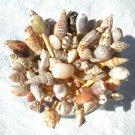 25 Seashell Toothpicks Cocktail Party Picks Wedding Sea Shells Beach Conch Ark