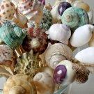 6 inch Large Seashell Party Toothpicks Food Skewers Picks Shells Beach Wedding