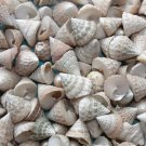 15 Troca Pong Cone Seashell Craft Shell Beach Wedding Shower Beige Trocus Lot