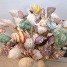 20--4 inch Long Seashells Party Mix Toothpicks Skewer Pick Shell Wedding Dinner