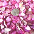 5 oz Pink Crushed Seashells Mosaics Vase Filler Sea Shells Craft Jewelry Abalone