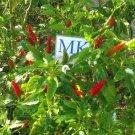 Bird's eye chili or Thai chili AUTHENTIC ONE! Thai Dragon 20 Seeds (17)