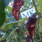 7 POD Bublegum Chocolate,10 seeds,Capsicum chinense (75)
