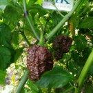 Big Black Mama,10 seeds,Capsicum chinense (417)