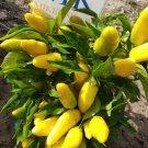 Hot Banana pepper,10 semillas,seeds,Capsicum annuum (265)