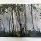 """""Up in the Clouds"""" by Mike Jones - Birch Trees - Framed Canvas"