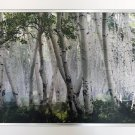 """""""""""Up in the Clouds"""""""" by Mike Jones - Birch Trees - Framed Canvas"""