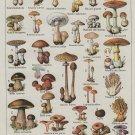 "Champignons Mushrooms Chart   18""x28"" (45cm/70cm) Canvas Print"